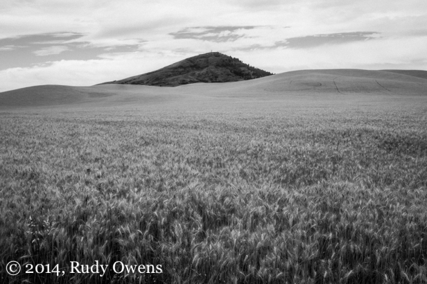 Wheat fields surround the highest point in the Palouse, Steptoe Butte.