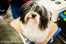 Dog Show Photo