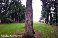Sellwood Park Photograph