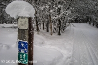 Anchorage Ski Trails Photo