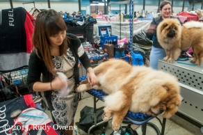 It takes a lot of work getting a mass of fur looking good for show time.