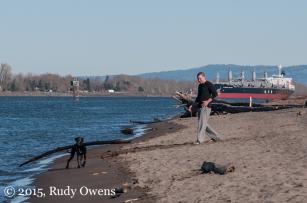 Dog Fetching Big Stick Photo
