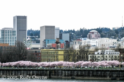 Portland In Bloom Photo