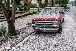 Cherry Blossoms on Chevy