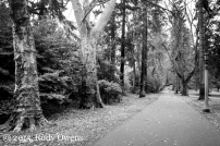 The Stately Path at Laurelhurst Park