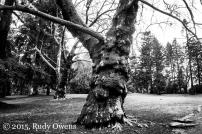 Laurehlhurst Park Old Timer