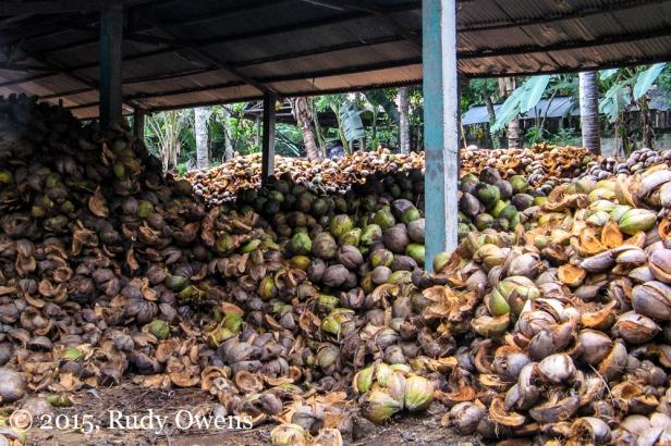Bali Coconuts Photo
