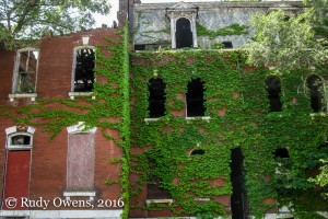 Beautiful old brick homes have long gone feral in the economically challenged neighborhoods of north St. Louis.