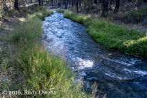 Paulina Creek in Deschutes National Forest