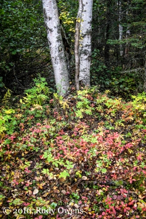 Fall Colors, Chugach State Park