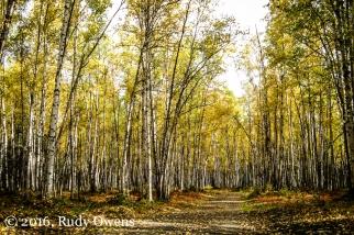 Eagle River Area, Chugach State Park