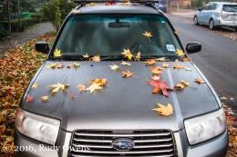 Maple Leaves on a Subaru