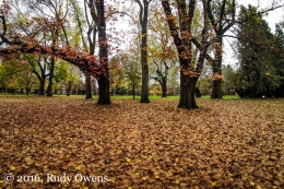 Fallen Leaves, Reed College