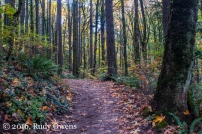 Late October on the Wildwood Trail