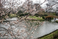 Spring blossoms were peaking out at the Japanese Garden.