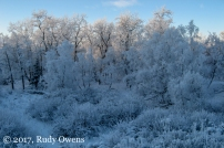 Kincaid Park in Anchorage, covered in hoarfrost