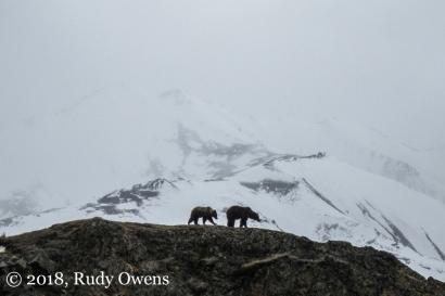 Taken near Polychrome Overlook in Denali National Park
