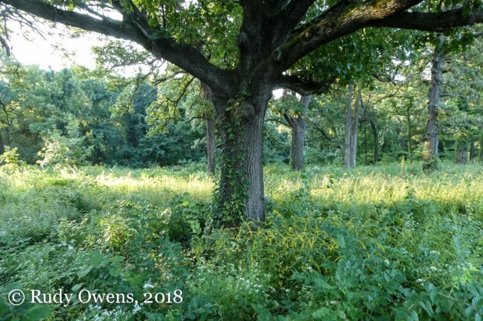 Oak Tree Forest Park