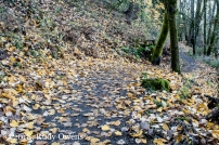 Oaks Bottom Trail and Leaves (12-2018)