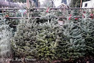Christmas Trees, Portland