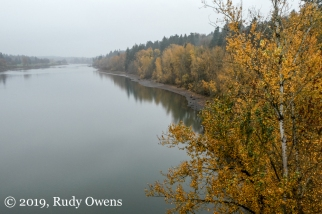 Willamette River Looking South, November 2019